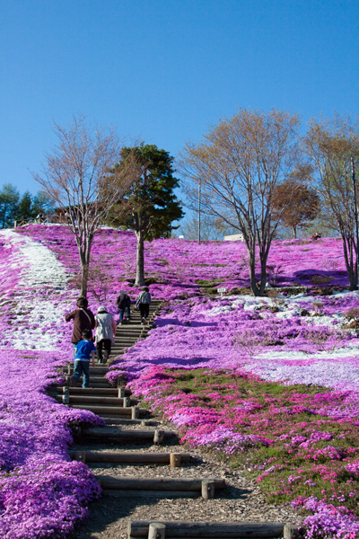 Higashi Mokoto Shibazakura Park 60871