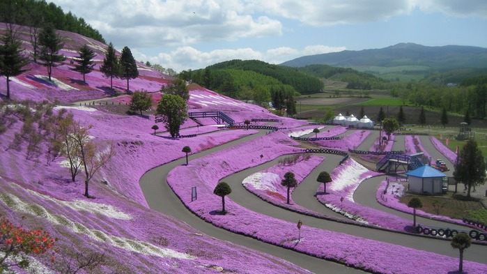 Higashi Mokoto Shibazakura Park 64868