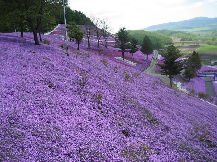 Higashi Mokoto Shibazakura Park 65257
