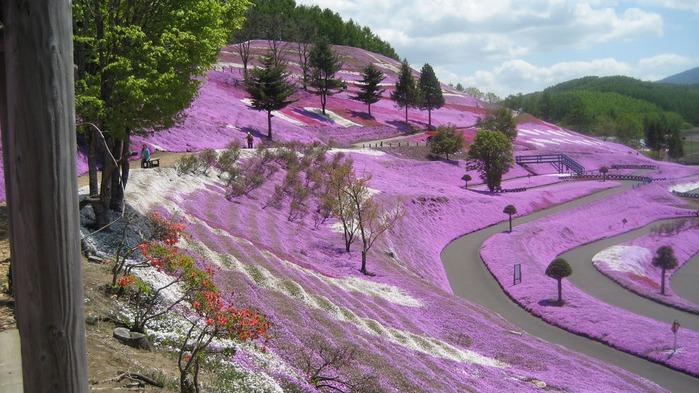Higashi Mokoto Shibazakura Park 14983