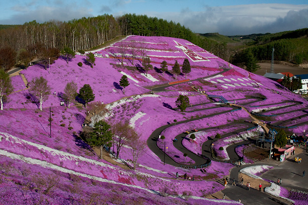 Higashi Mokoto Shibazakura Park 79452