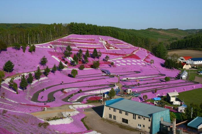 Higashi Mokoto Shibazakura Park 25784