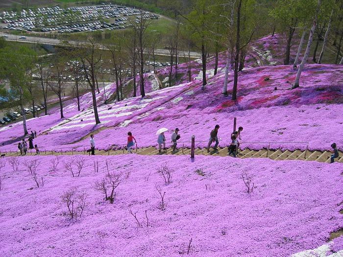 Higashi Mokoto Shibazakura Park 90369