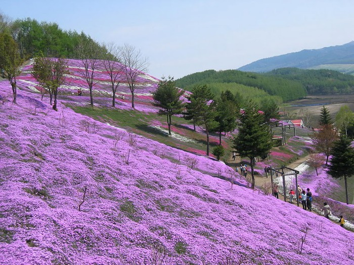 Higashi Mokoto Shibazakura Park 36177