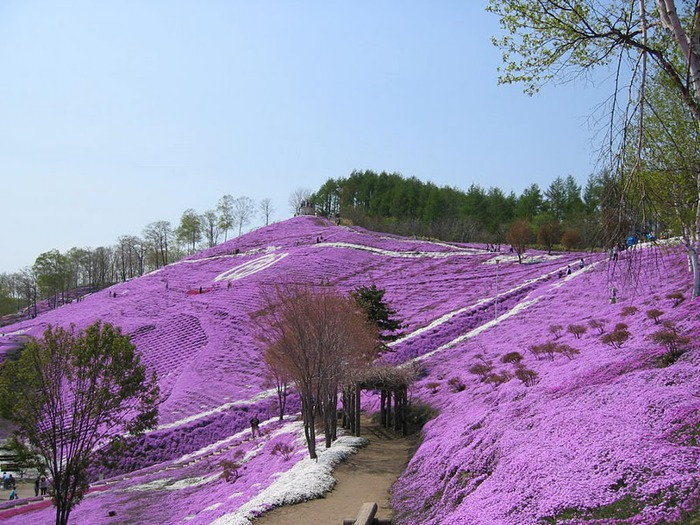 Higashi Mokoto Shibazakura Park 77846
