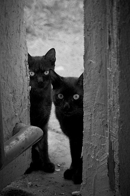 чёрные коты идут за вами