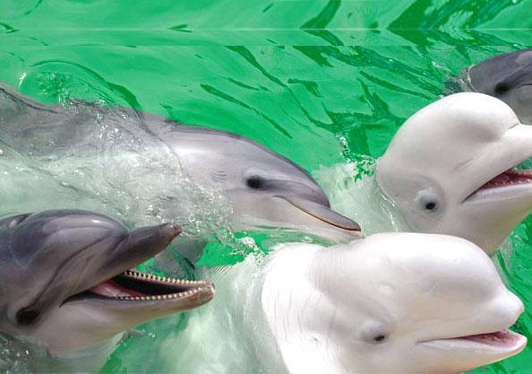 Смерть дельфина в Московском дельфинарии всколыхнуло интернет-сообщество.