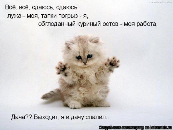 по номеру сотового: