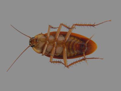 Знаете ли вы, что тараканы покинули дома человеков?  Я не знал.