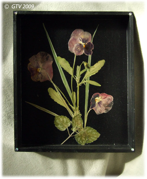 Фото гербария из цветов 129