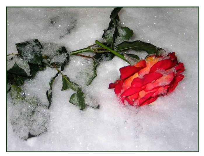 Замёрзшая любовь