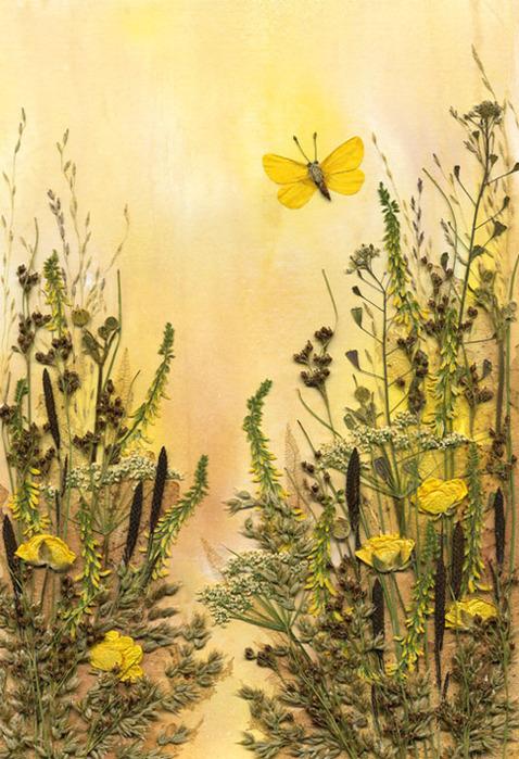 Цветы гербарий фото