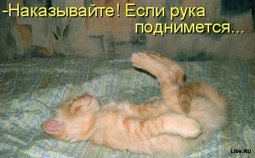 Re: Забавные фото котов и не только.