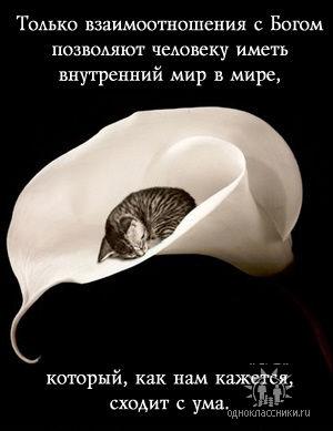 Scards.ru Доверие Внутренний мир