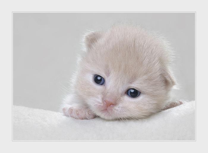 Смотреть фото кошек разных пород - b8