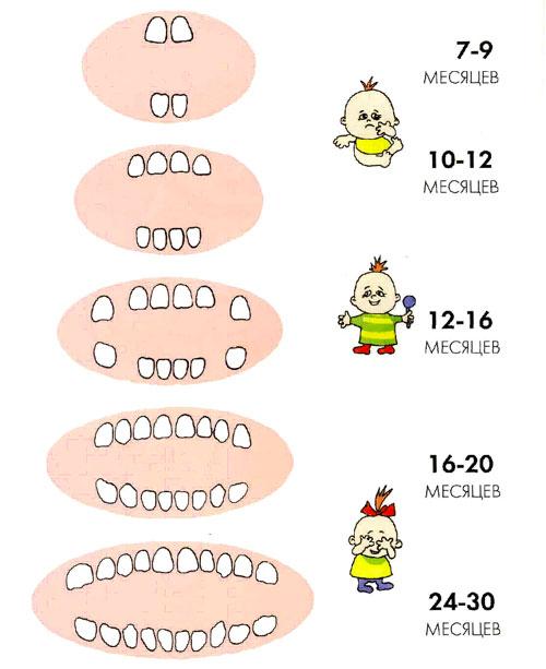 Рис. 3. Соответствие возраста и количества молочных зубов у ребенка.