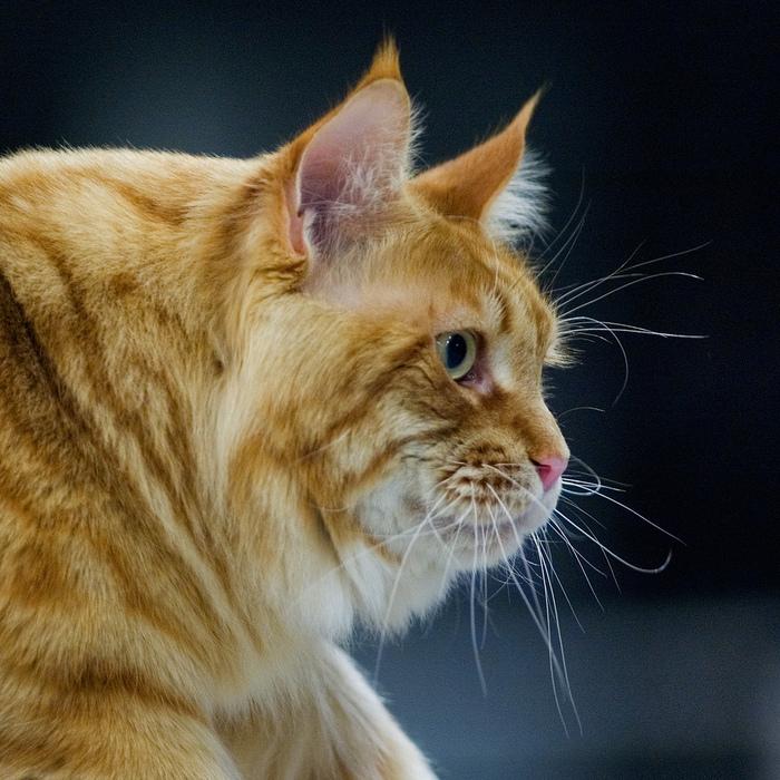 А дома у дамы жил рыженький кот, Была дама котиком этим помешена, Как будто других больше нету забот.