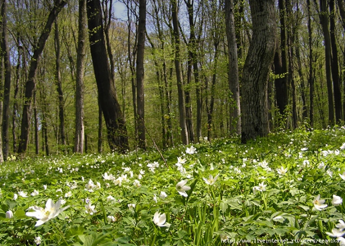 http://img1.liveinternet.ru/images/attach/c/1/54/101/54101778_1264082276_41.jpg