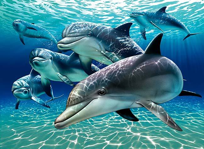 http://img1.liveinternet.ru/images/attach/c/1/54/480/54480094_sunlit_dolphin_pals_1A.jpg