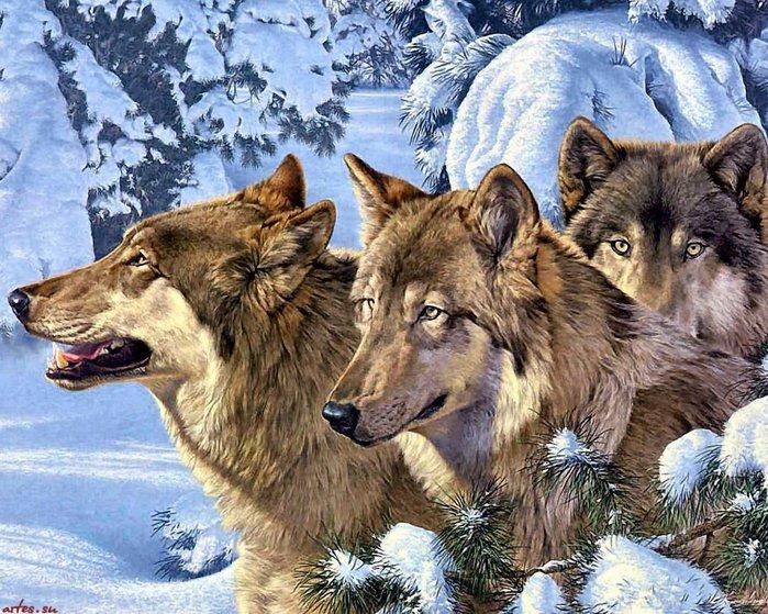 ВОЛК (Canis lupus), самый крупный представитель семейства волчьих.