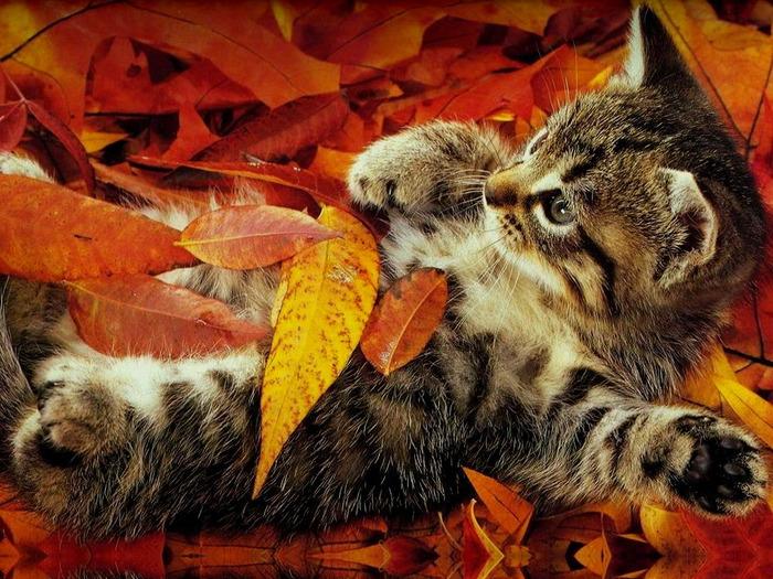 http://img1.liveinternet.ru/images/attach/c/1/55/513/55513302_wallpapers_cats_204.jpg
