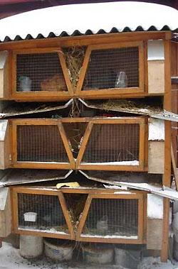 Клетки для кроликов.ж. В личных подсобных и фермерских хозяйствах кроликов рекомендуется содержать только в клетках.