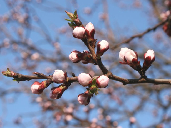 Просматривает изображение Анимация,Весна пришла(с пожеланием).gif - Озерский городской форум