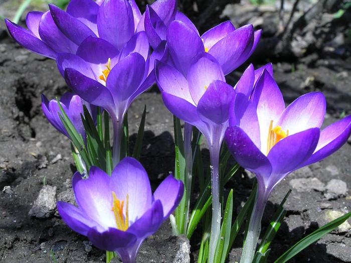 http://img1.liveinternet.ru/images/attach/c/1/55/762/55762134_zhzh.jpg