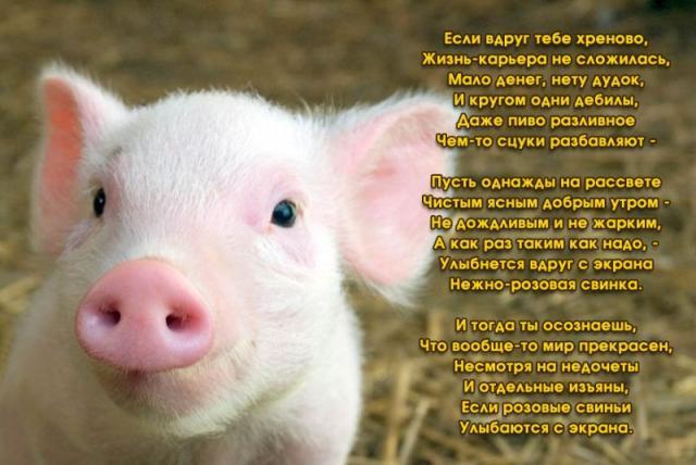 смешные видео про свинку пеппу до слез