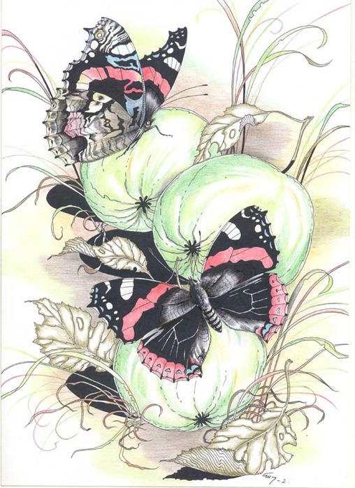 свой цитатник или сообщество!  Бабочки.  Прочитать целикомВ.