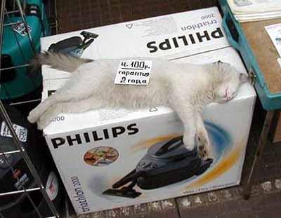 прикольные коты - 109 : прикольные коты : Прикольные картинки : Картинки.