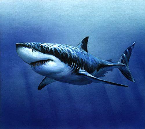 Нападая на свою жертву, акулы закрывают глаза, чтобы бьющаяся добыча их...