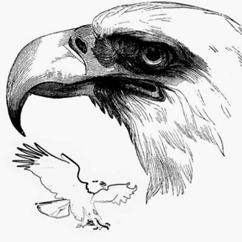 Орел: предпросмотр.