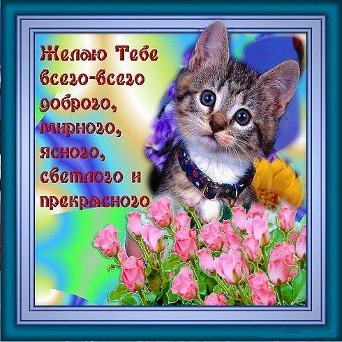56560459_56187734_232.jpg