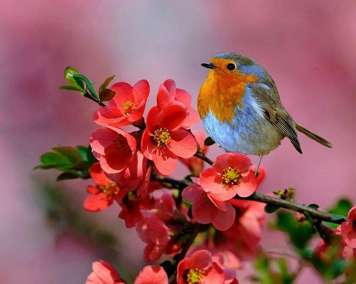 Какие же красивые птички.  Я же их вовсе не знаю....а они живут среди нас.