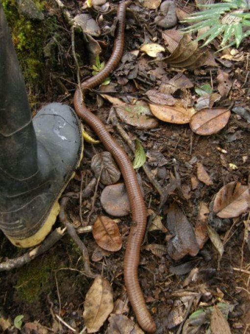 червь-гигант фото 13.