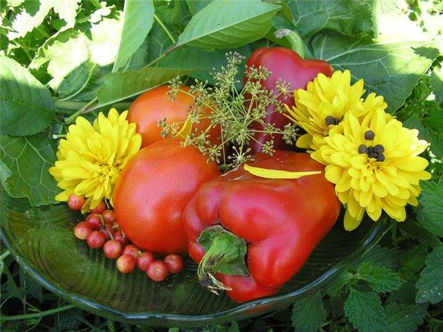 Синьцзян стал главным поставщиком овощей в страны Центральной Азии.