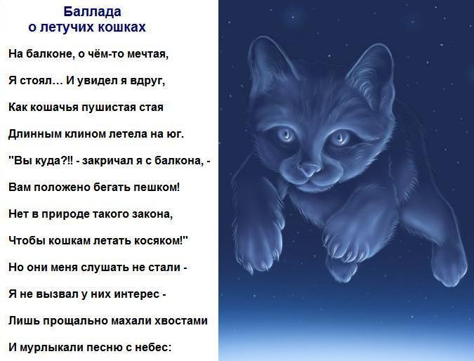 Стих про летающего кота
