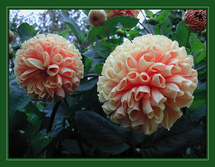 Лида лида романенко блог привет ру лида