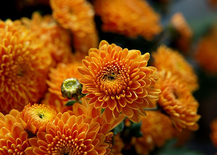хризантемы фото - Это бисер!