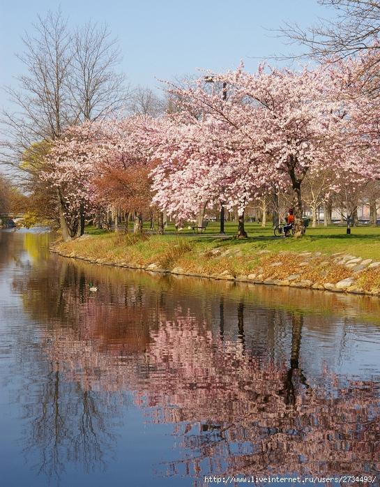 Весенний бостон фотография photo