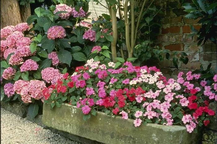 многолетние цветы для оформления клумб.