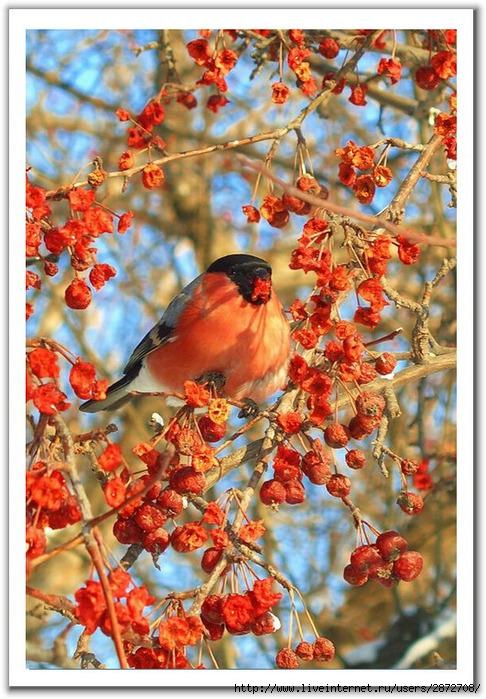 Птицы и цветы.