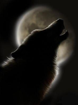 Волк записи с тегом волк