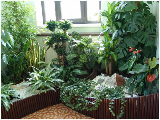 Зимний сад в вашей квартире