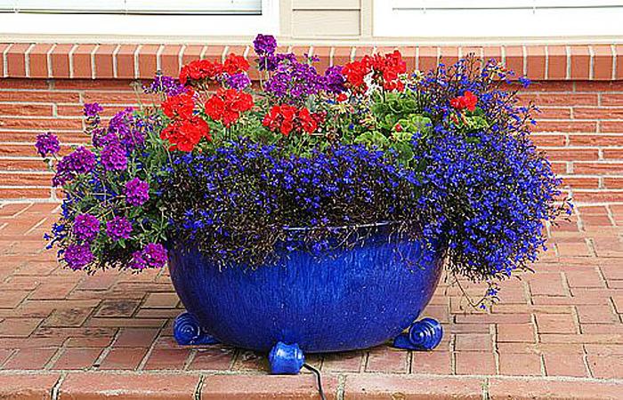 Как красиво посадить цветы во дворе фото