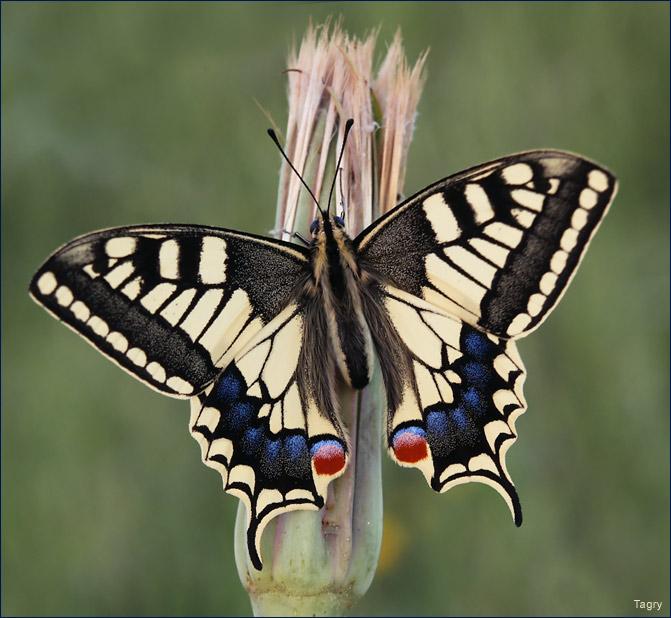 Автор tanya grishko теги бабочка макро