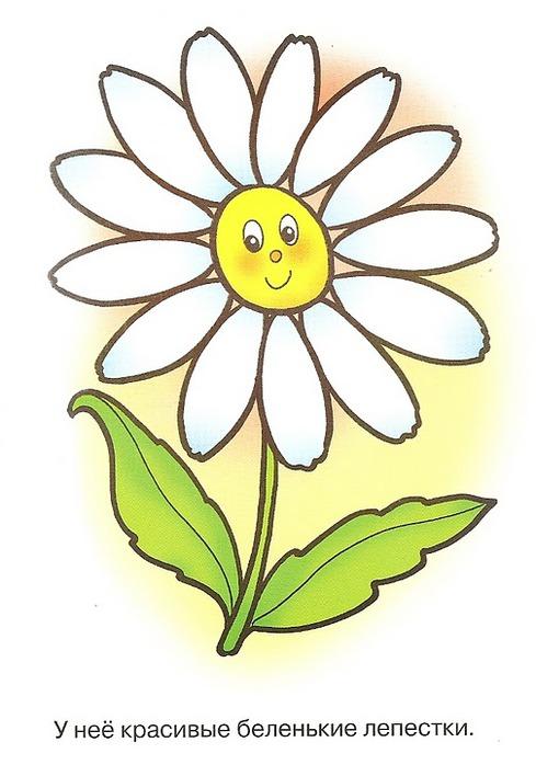 Картинка цветок ромашка для детей 1