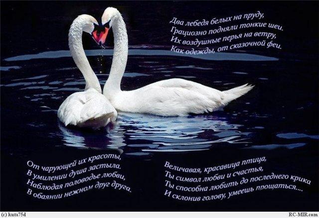 песни о лебединой любви мужских ароматах