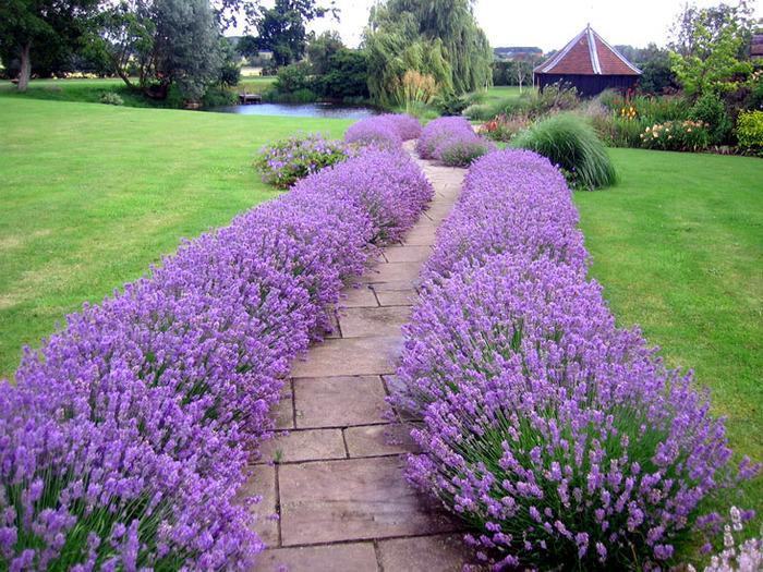 Красивая рабатка украсит участок и сад.